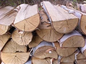 Dry Birch 1 Courtesy of PGAIR